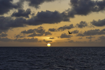 Pelican flying over the ocean at sunset