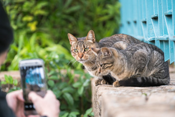Woman takes pictures of cats on the phone in the park