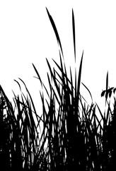 Realistic grass silhouette (Vector illustration).ai10