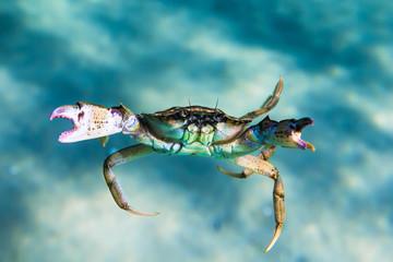 Crab on sand in underwater