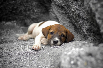 Homeless and hungry little dog abandoned stay at the hole