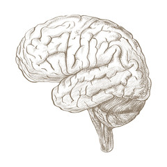 Brain as a pencil sketch style image
