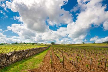 Vineyards in Burgundy - Route de vins, France