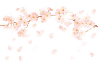 桜 舞い降りる 白
