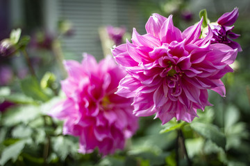 flowering and ornamental