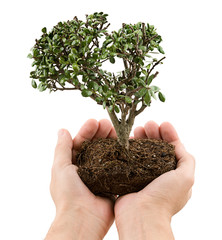Environmentalist  Hands offering tree