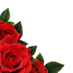 Rred rose flowers corne