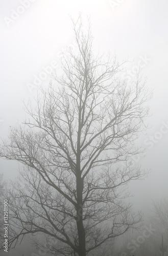 Rbol niebla pa s vasco u84a1209 f17 immagini e - Arboles pais vasco ...