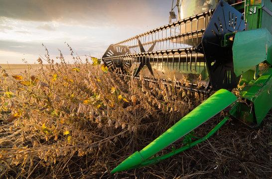 Harvesting of soybean field