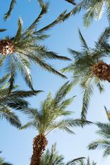 Palm leafage against blue sky.