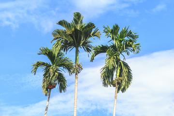 Palm trees against blue sky, Thailand