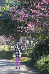 Little asian girl taking photo of cherry blossom