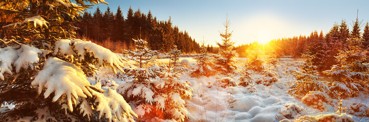 Foto op Textielframe Zwavel geel Winter Forest Landscape Panorama, Germany