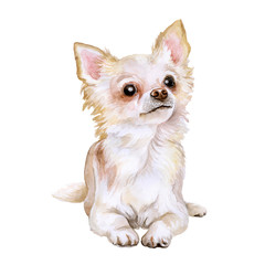 Watercolor portrait of popular Mexican breed Chihuahua dog isolated on white background. Hand drawn sweet home pet. Greeting card design. Clip art. Add your text. Short-haired (smooth coat), white