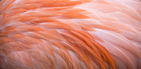 Foto auf Leinwand Flamingo Flamingo feather pink background