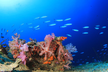 Underwater fish school on ocean coral reef