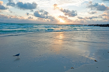 Miami Seagull Seaside Looking at Beautiful Sunrise