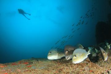 Scuba diving. Divers swim over underwater ocean coral reef