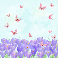 field of blooming crocus with flying butterflies for your design