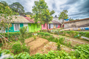 Sri Lanka, Nuwara Eliya: colourful houses of farmers in highland tea plantations