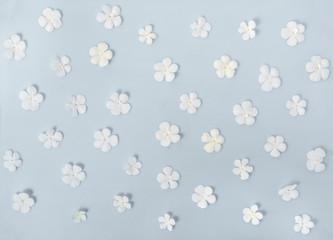 flat lay of beautiful trendy seamless pattern white flowers on b