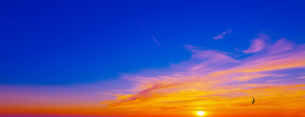 Fotobehang - seagull flying in a blue and pink sky