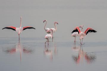 Foto op Aluminium Flamingo pink flamingos on swamp background