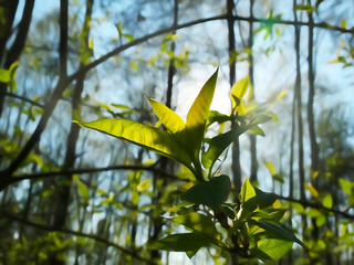 Иллюстрация природа, лес и листья на солнце ветви деревьев, весна