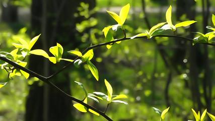 Иллюстрация природа, лес и листья на солнце