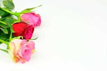 Valentinstag Motiv - Verschiedene Rosen mit weißem Hintergrund und Textfreiraum