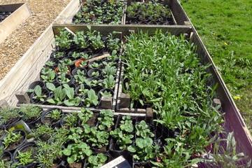 seedlings in garden containers