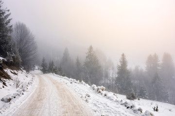 snowy road through foggy spruce forest