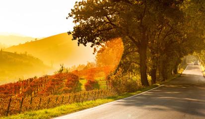 Autumn in Italy, vineyards at sunset