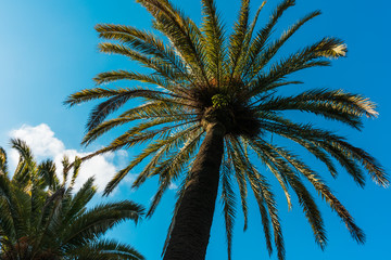 beautiful palms on a sunny day - as holiday background
