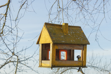tree house for the birds,