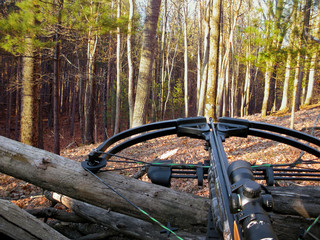 Foto op Aluminium Jacht crossbow resting on tree trunk in autumn woods