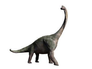 Brachiosaurus altithorax from the late Jurassic isolated on white background (3d illustration)