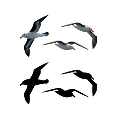 Seagulls set