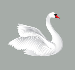 White bird isolated over white background. Swans illustration.