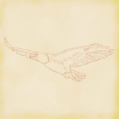 Eagle flight hand drawn sketch. Vector illustration.