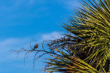 Bird in a Palm