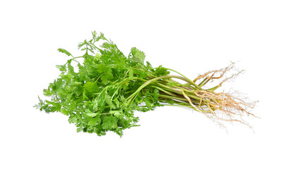 Coriander. Pile of fresh coriander leaves with root isolated on