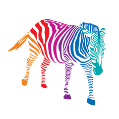Colorful striped  Zebra. Vector illustration isolated on white background
