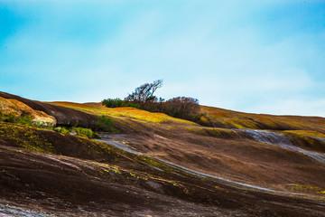 Domboshava.  Granite rock mountain.  A tree growing in one of the divots.