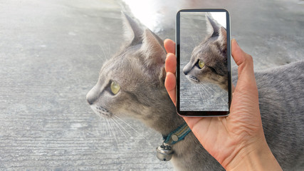 cat, cat on smart phone , take a photo of a cat smartphone