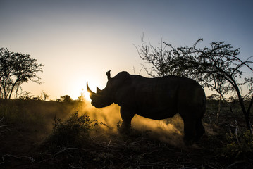 White Rhino silhouetted against a setting sun.