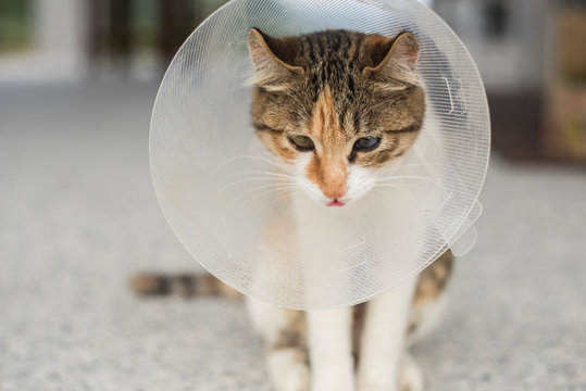little cat with Elizabethan collar