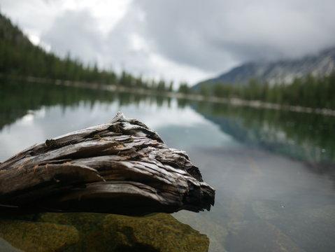mossy log over lake