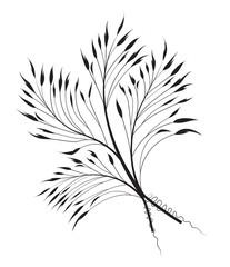 Vector Decorative grass