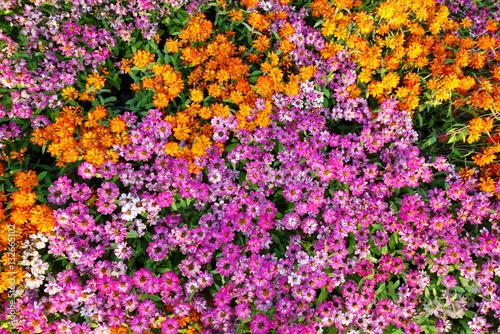 Flower Garden Top View , Flowers Healthy